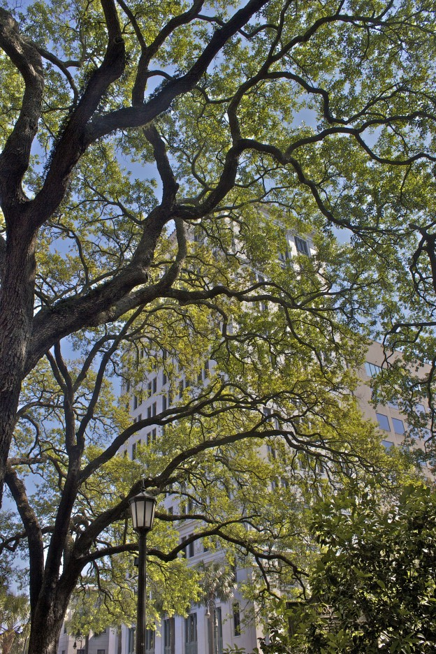 Savannah buildings and trees
